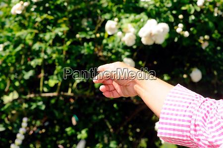 sunny day in rose garden