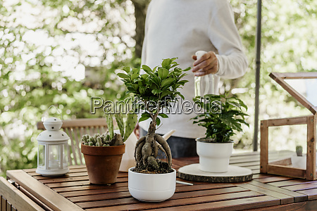 senior man spraying house plants
