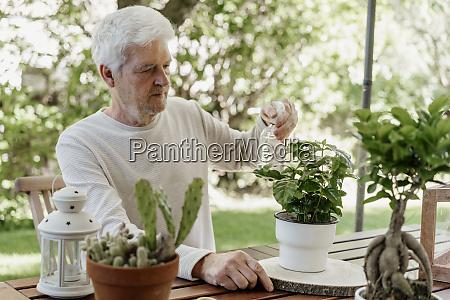 senior man spraying house plants