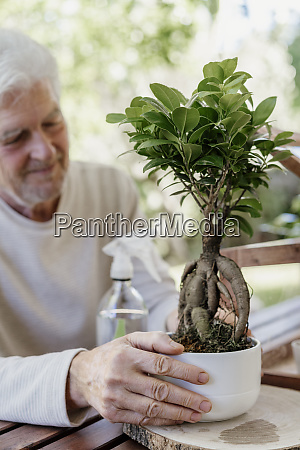 senior man holding bonsai plant