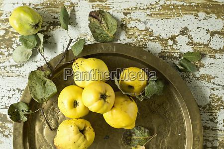 fresh quincescydoniaoblongaon metal tray