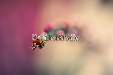 close up of ladybug crawling on