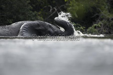 elephant bathing ingarambariver