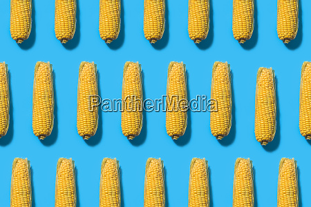 pattern of corns against blue background