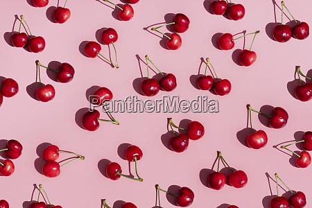 fresh cherries on pink background