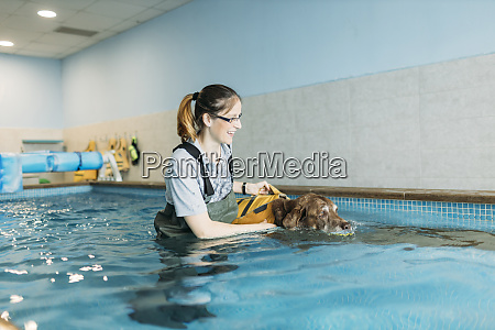 female physiotherapist assisting labrador retriever in