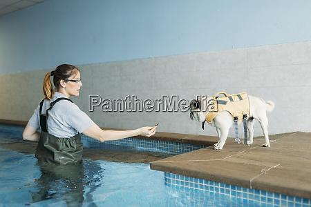 female physiotherapist training pug dog at
