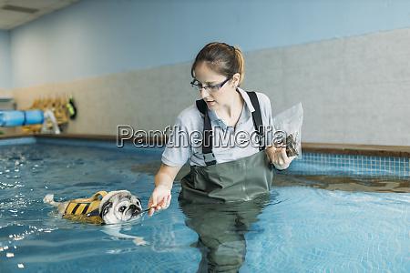 female physiotherapist feeding pug dog in