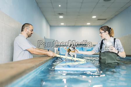 physiotherapists training pug dog on inflatable