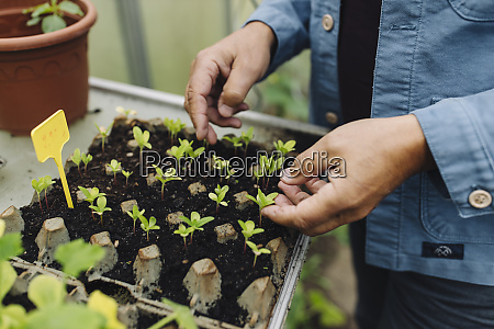 close up of man examining seedlings