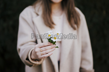 womans hand holding marguerites close up