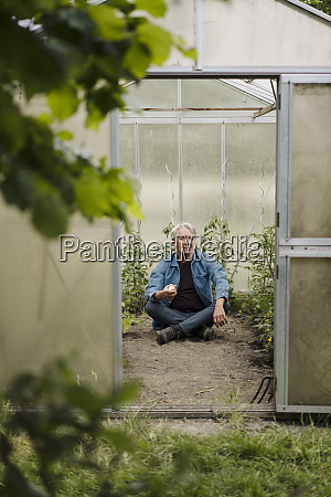 senior man sitting in a greenhouse
