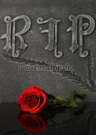 respectful red rose