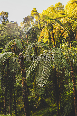 lush trees at caldeira velha sao