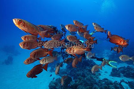 palau school of big eye fish