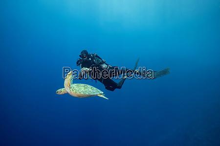 palau blue corner diver and sea