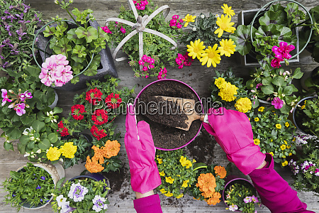 hands of woman planting large variety