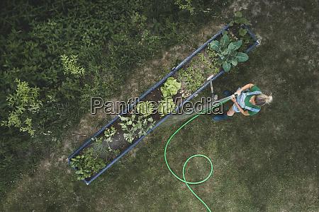 aerial view of woman watering vegetables