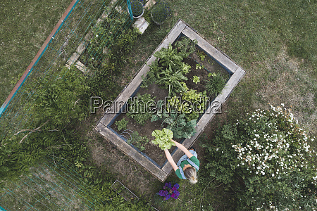 aerial view of woman examining vegetables