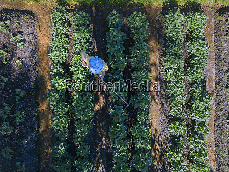 female worker at strawberry field aerial