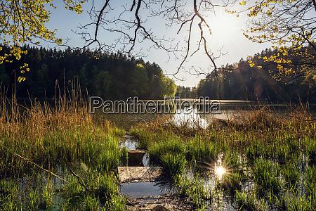 germany bavaria egling grassy shore of
