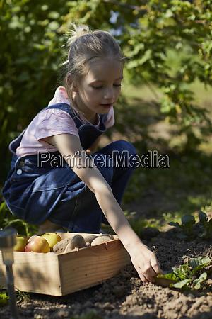 girl harvesting in allotment garden