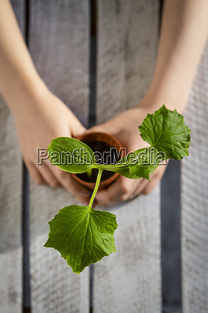 arms of little girl holding potted