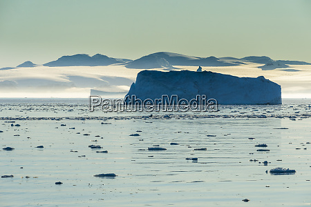 icebergs floating in hope bay at