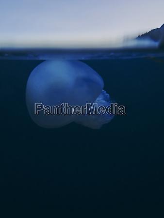 spain catalonia cap de creus jellyfish
