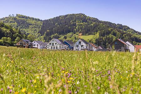germany baden wurttemberg buchenbach meadow in