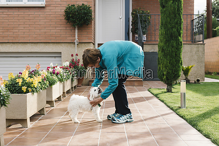 senior woman putting on dog harness