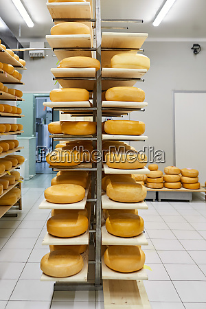cheese factory cheese wheels maturing in