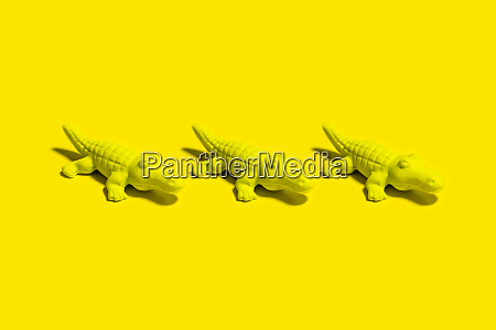 studio shot of three small crocodile