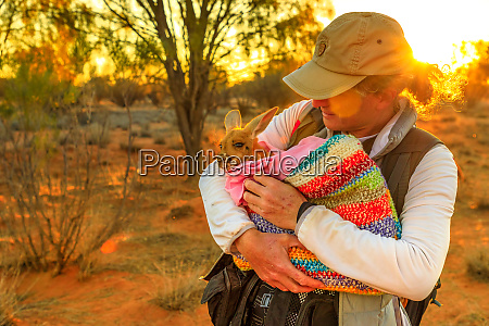 tourist man holding orphaned baby kangaroo