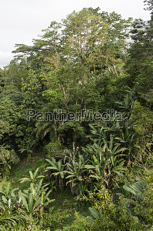 lush forest on the island of