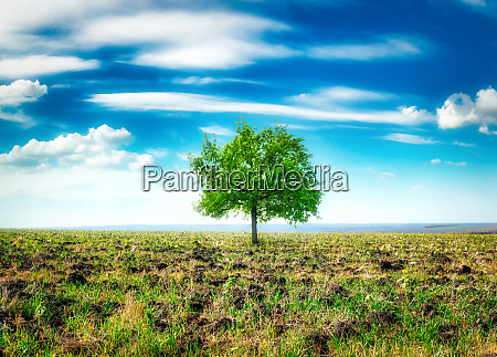 meadow with big tree