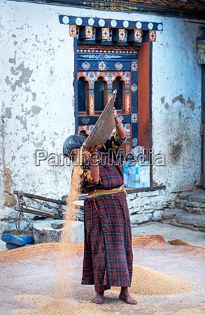 traditional rice sifting at tshangkha village
