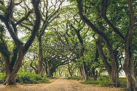 beautiful forest of jawatan perhutani near