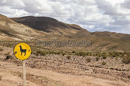 llama crossing sign on carretera 701