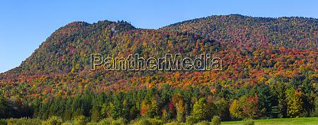 vibrant autumn coloured foliage in the