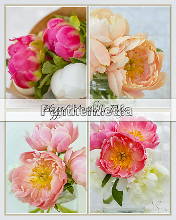 collage of four pictures of peonies
