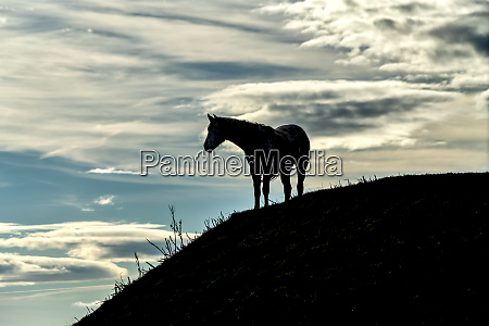 silhouetted horse standing on a hillside