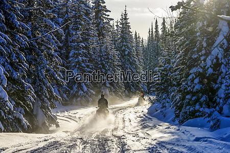 snowmobiles going down a trail through