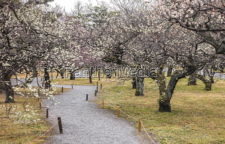 empty gravel footpath in old blooming