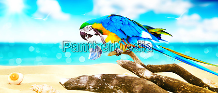 macaw parrot with medical mask on