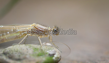 close up of a dragonfly on