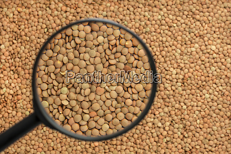 lentils through a magnifying glass