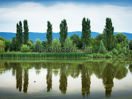 trees reflecting in a lake in