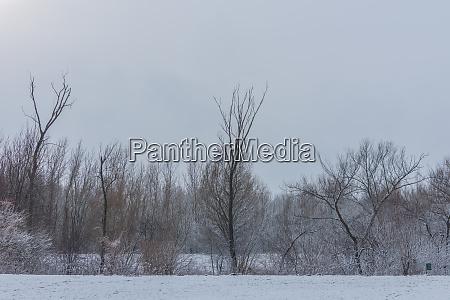 graue landschaft mit baeume im winter