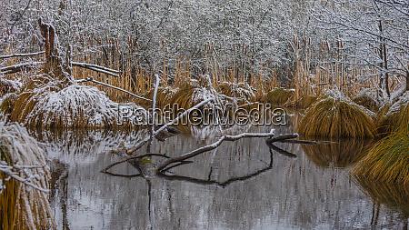 vereiste sumpflandschaft im winter
